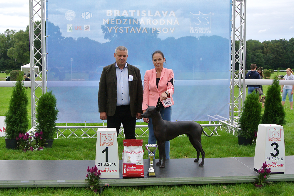 Best Junior of FCI group V - BIS CACIB Bratislava (Slovakia), Sunday, 21 August 2016