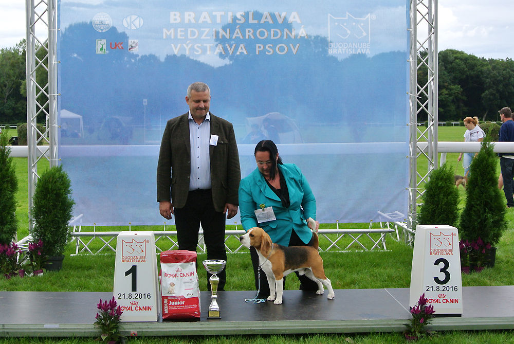 Best Junior of FCI group VI - BIS CACIB Bratislava (Slovakia), Sunday, 21 August 2016